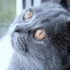 Vermisste Katzen in Geroldswil